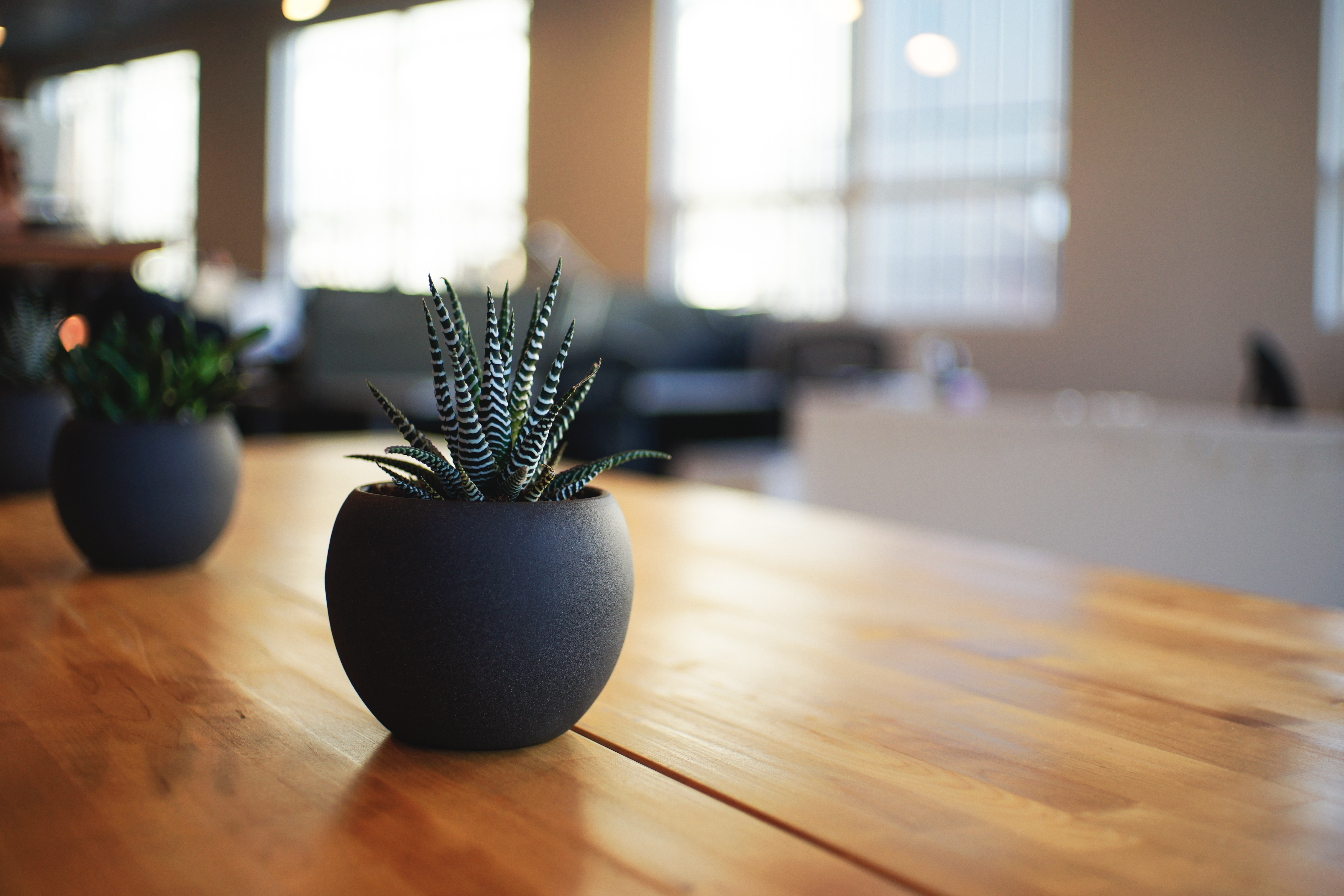 indoor air quality, plant on table