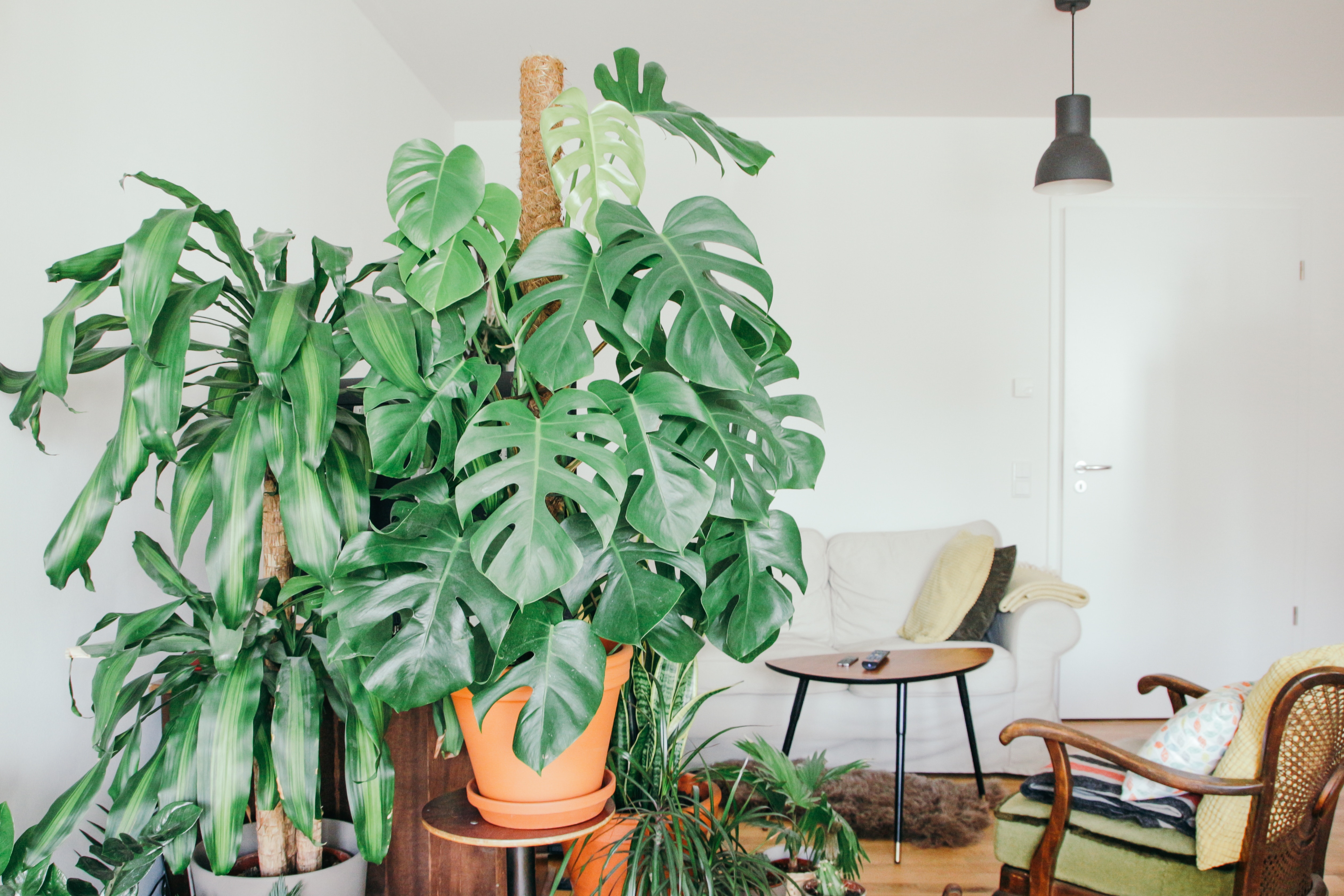Living Room with great indoor air quality