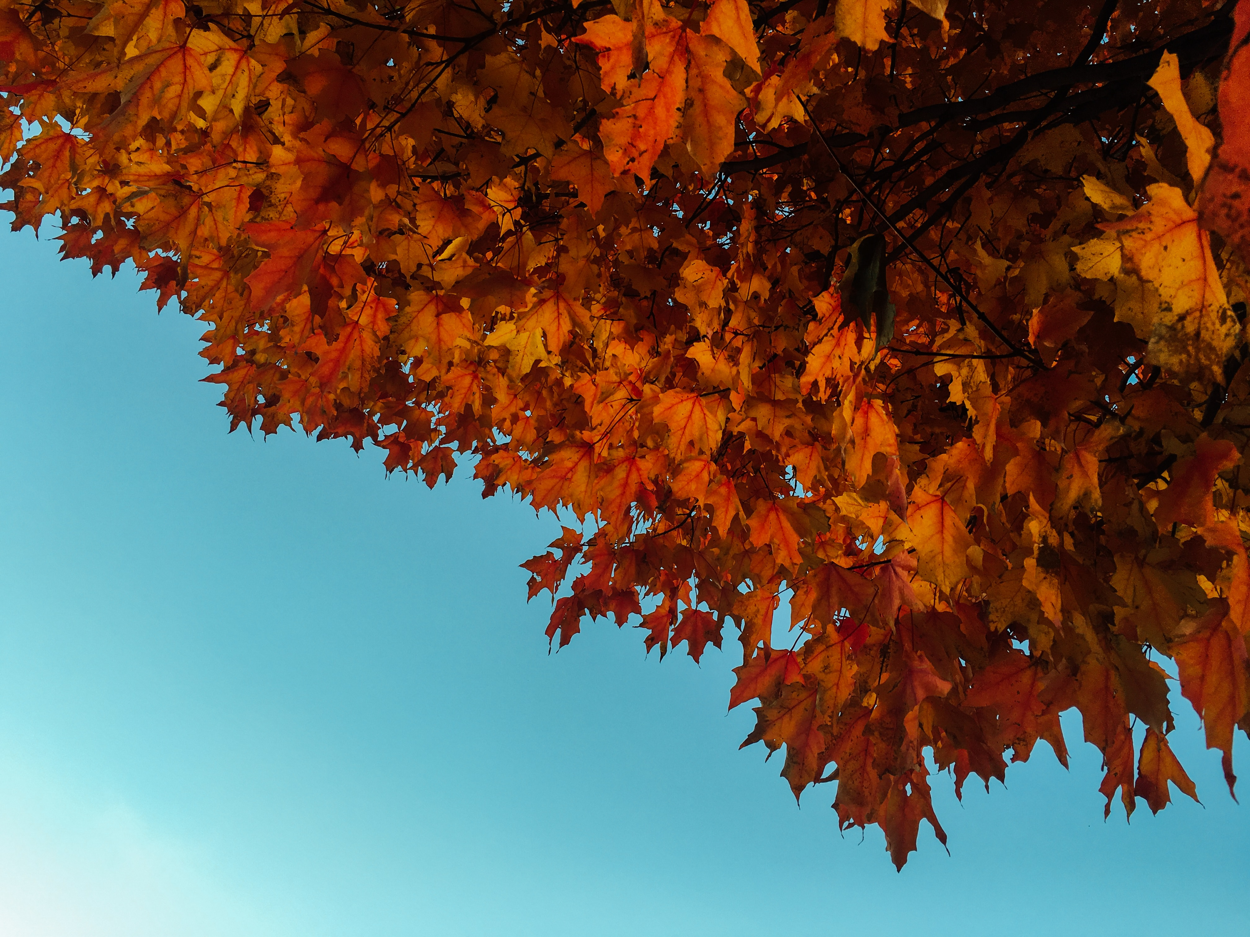 Fall leaves for air conditioning